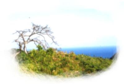 http://nezu.cowblog.fr/images/falaise-copie-2.jpg